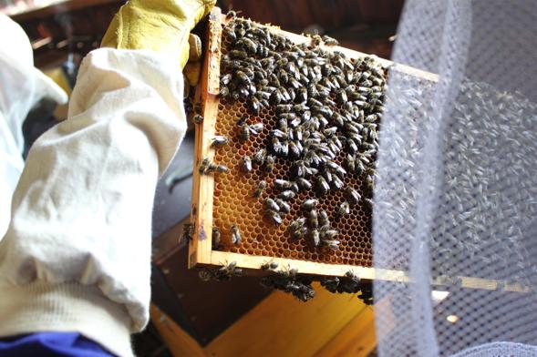 nB_Gruenderin-Viktoria-Schmidt-bei-der-Arbeit-an-den-Bienen