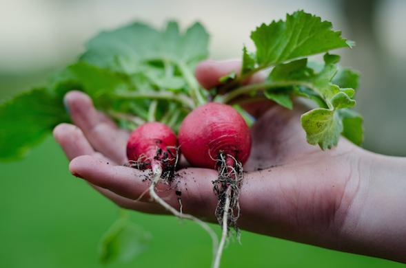 healthy-vegetables-bio-gardening