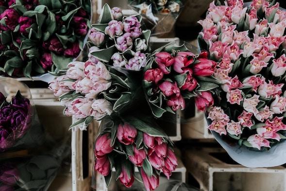 Blumen Ja Bitte Nachhaltige Vorschläge Für Deine Blumenwahl