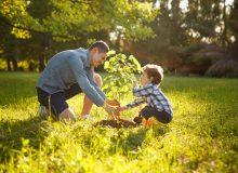 Mann und Kind beim Einpflanzen eines Baums