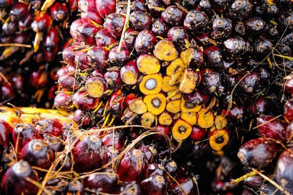 palm_oil_frucht